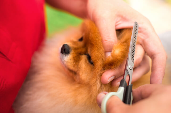 Groomer Clipping Dogs Nails