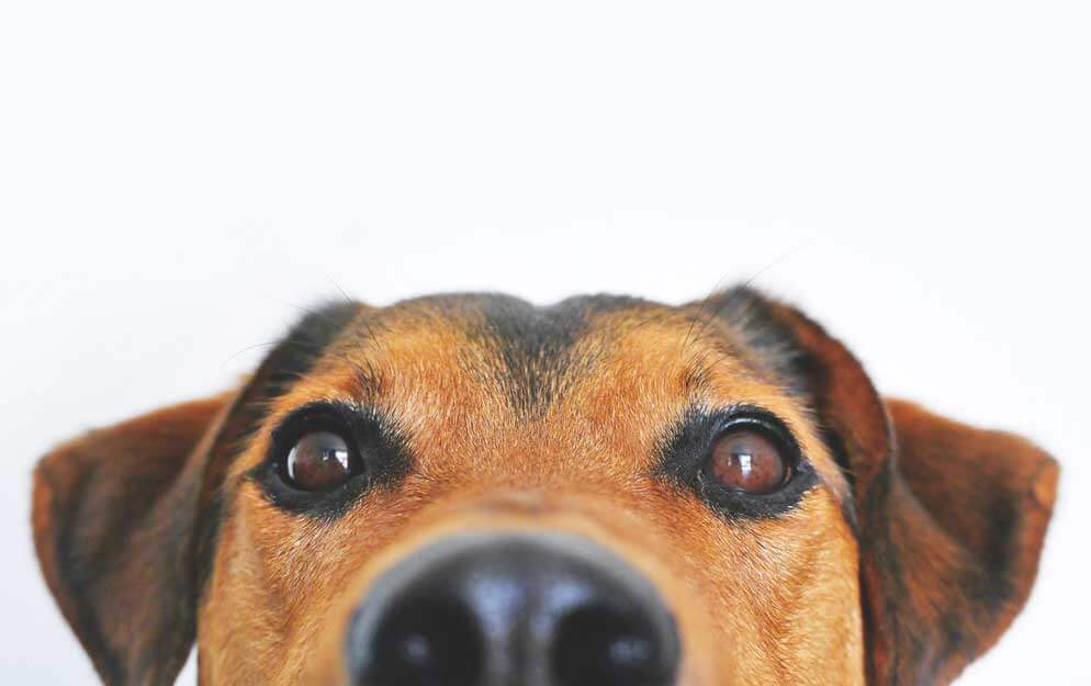 Finding the right insurance for your pet business