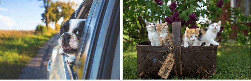 dog in car | litter of kittens
