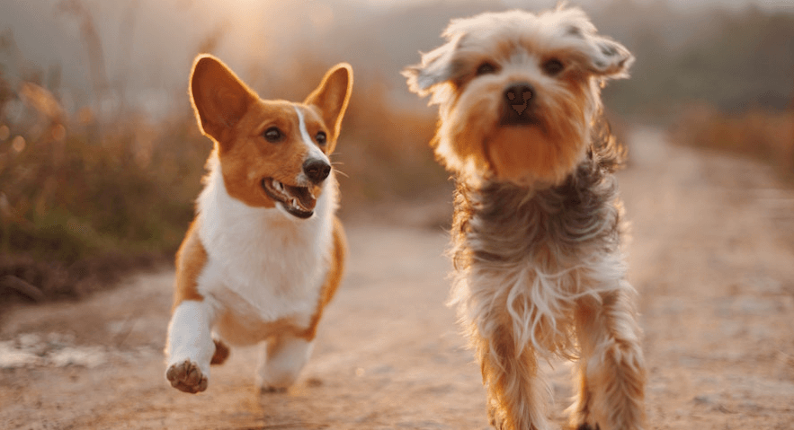 How to get your dog walking business up and running - PetProfessional