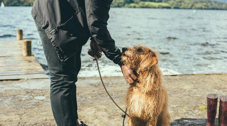 Man patting a dog outdoors