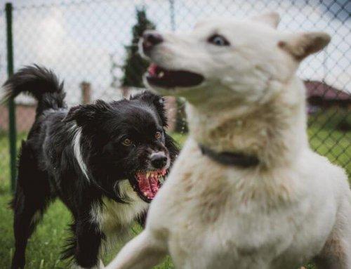 Dog bites – common areas bitten & how to treat