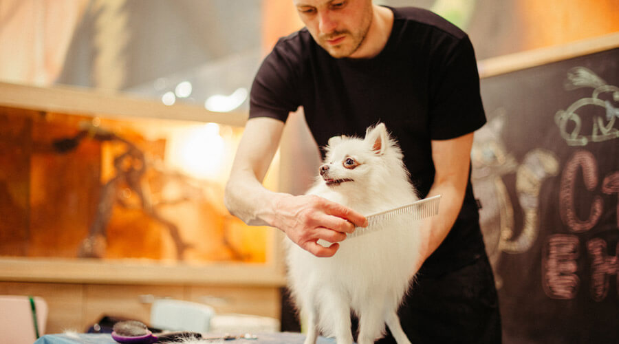 Man grooming a white dog