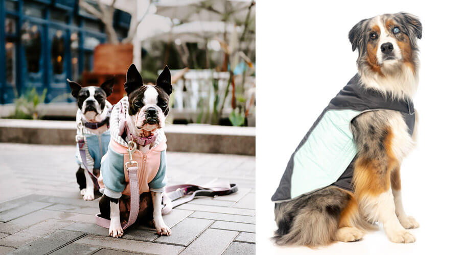 keeping pets safe in winter doggy jackets