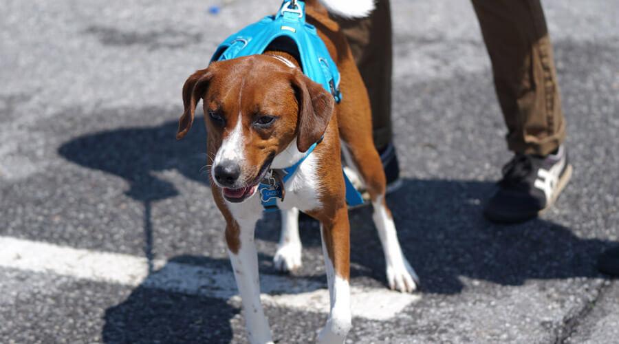 dog walker, pet safety tips