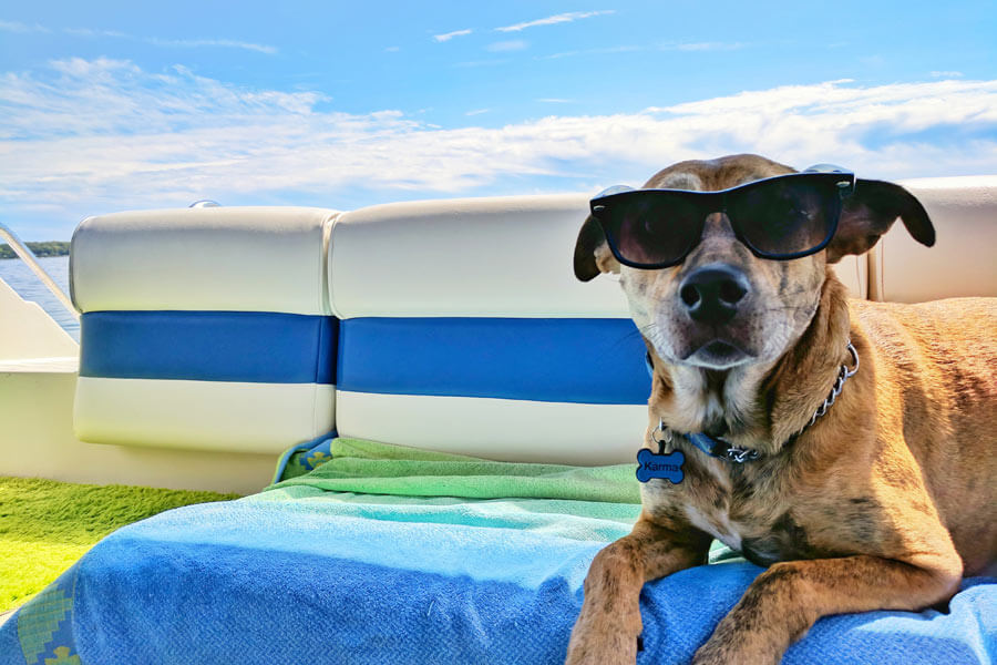dog on holidays, pet travel safety, wearing sunglasses