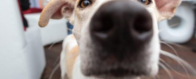 Close up of dog | International Dog Day