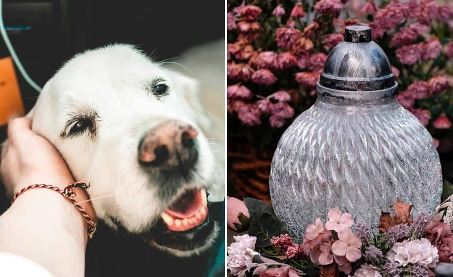 dog cremation