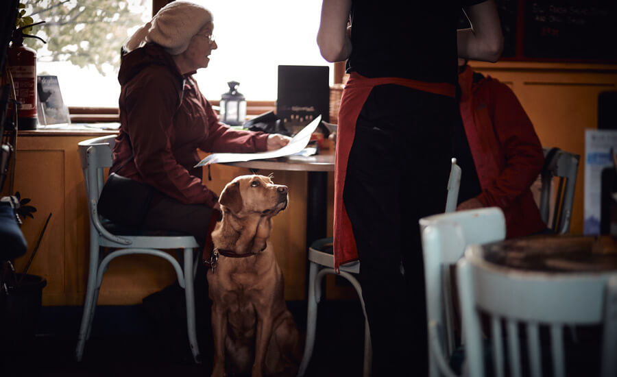 old woman with dog in cafe, loss of a pet