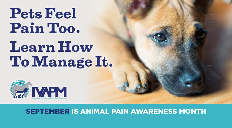 animal pain awareness month poster
