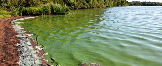 lake blue-green algae toxicity