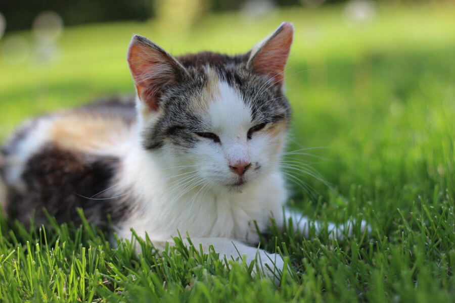 cat in grass, parasite prevention