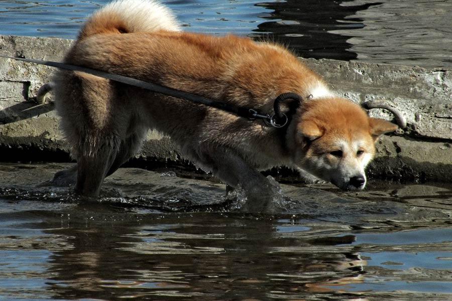 dog on lead near water