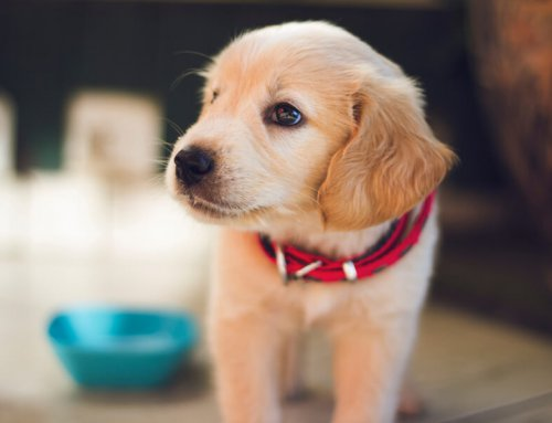 The link between dog food and heart disease