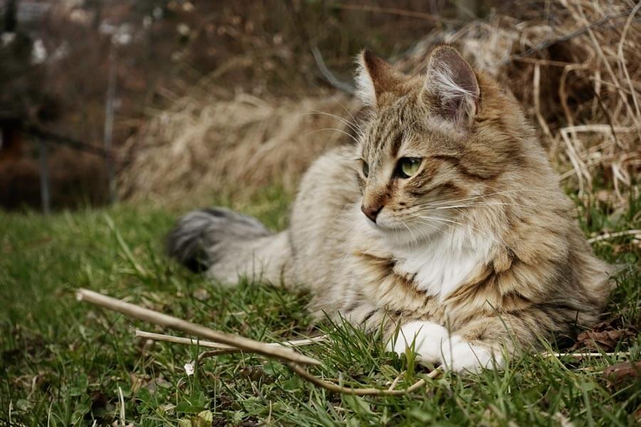 tabby cat lying outdoors