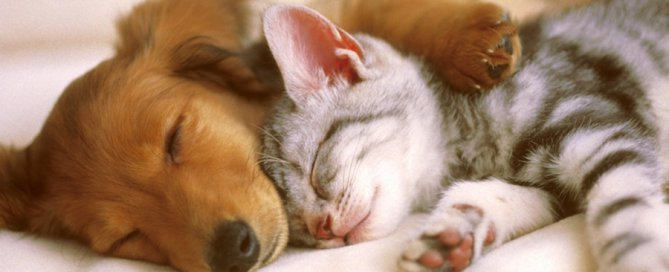 dog and cat sleeping | arthritis in cats and dogs
