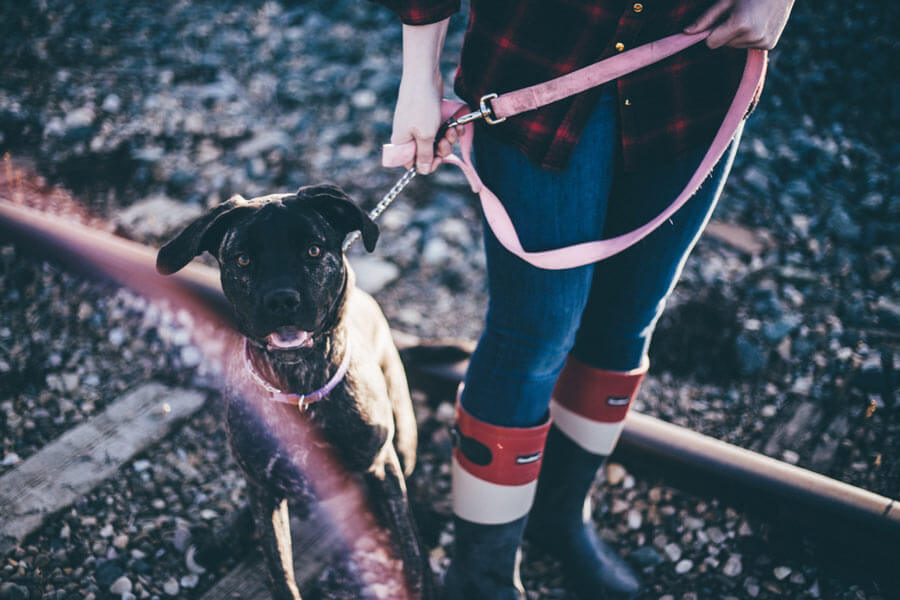 dog on lead outdoors