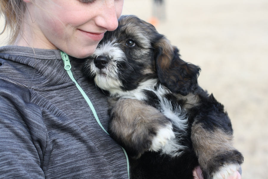 girl holding puppy