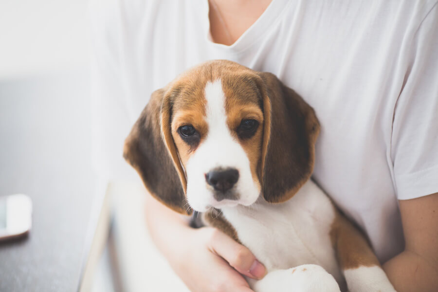 Man holding beagle in his arms