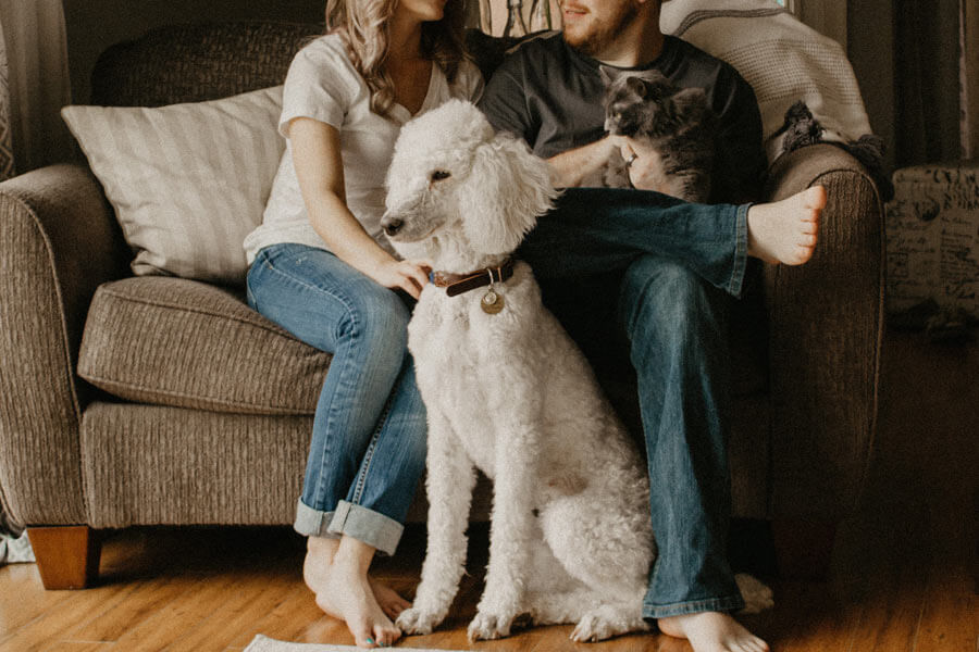 pet sitting, couple on sofa with cat and dog