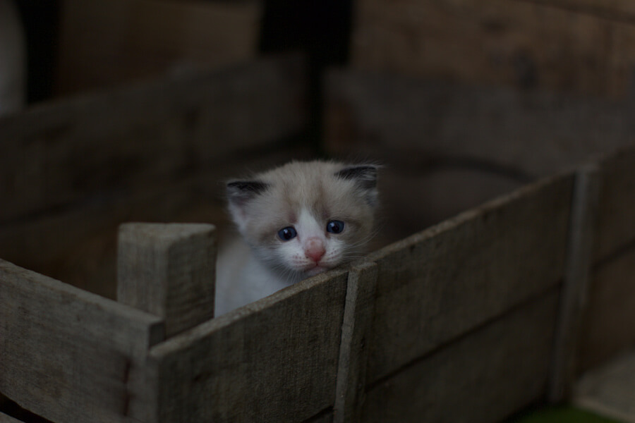 abandoned kitten in a box