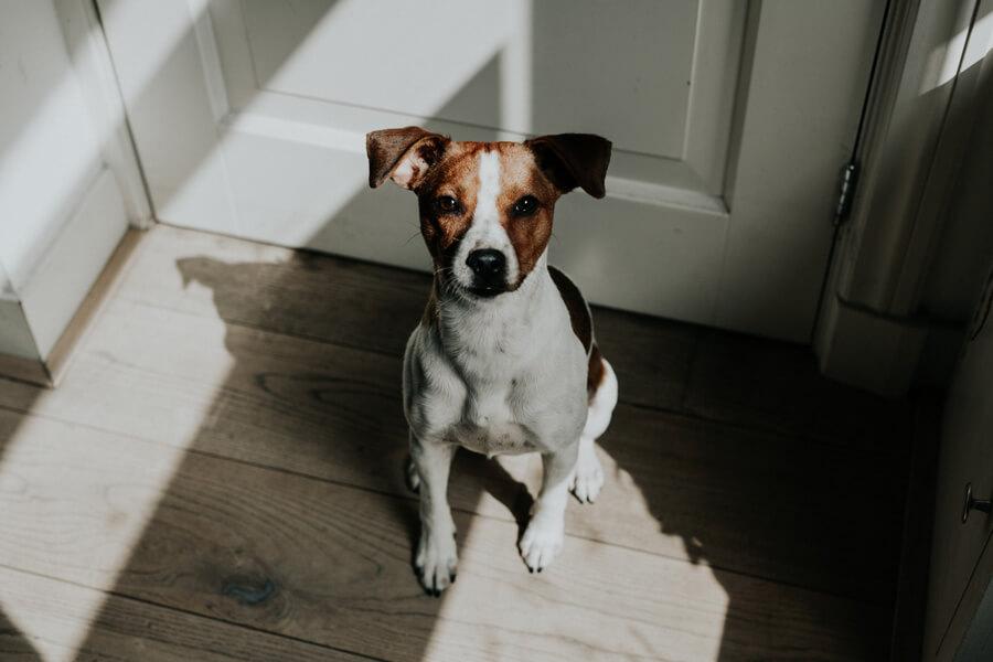 terrier sitting by front door