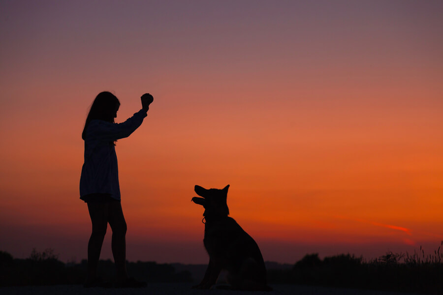 woman holding ball in air for dog