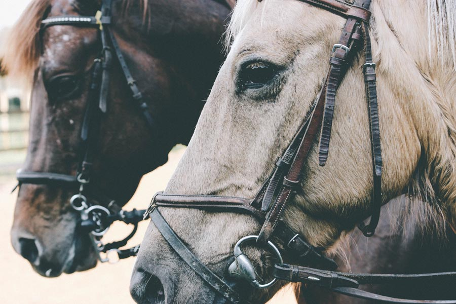 close up of two horse heads