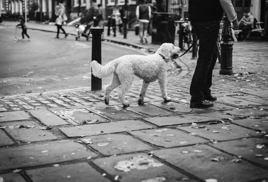 black-and-white-photo-white-dog-on-lead-in-street