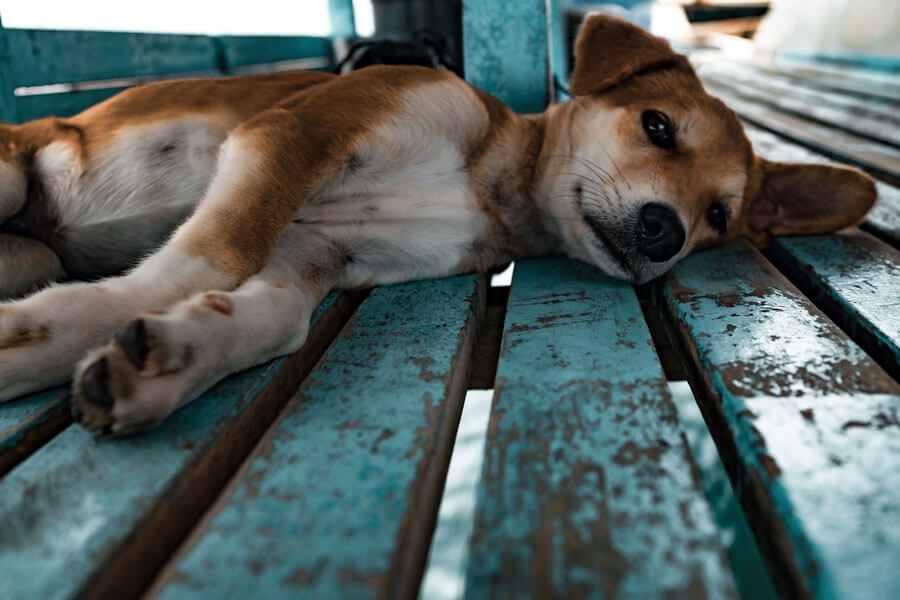 dog lying on its side, outdoors