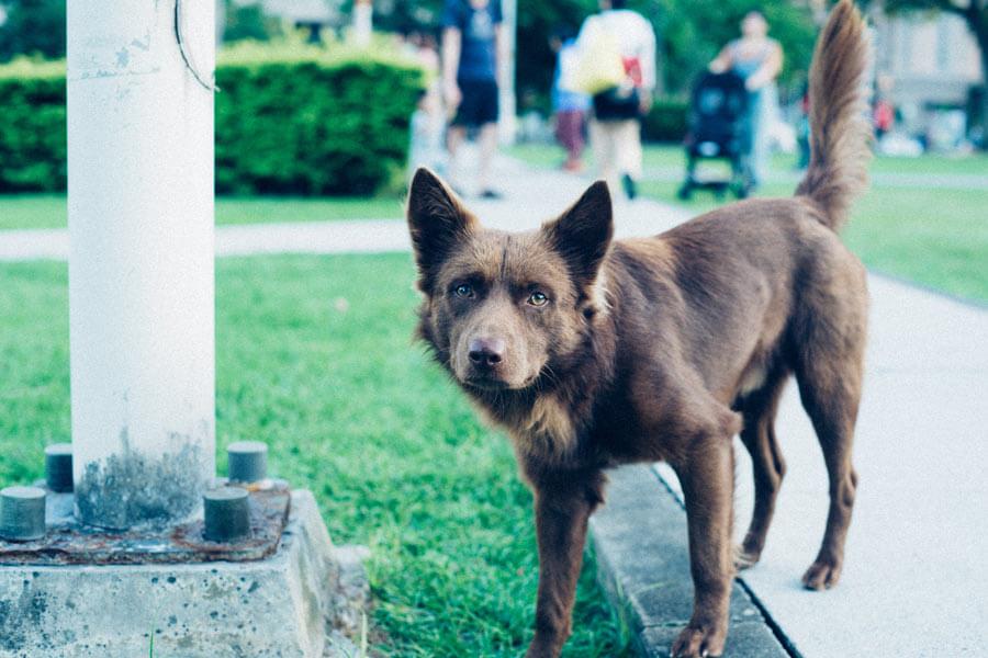 brown dog standing next to metal lamppost