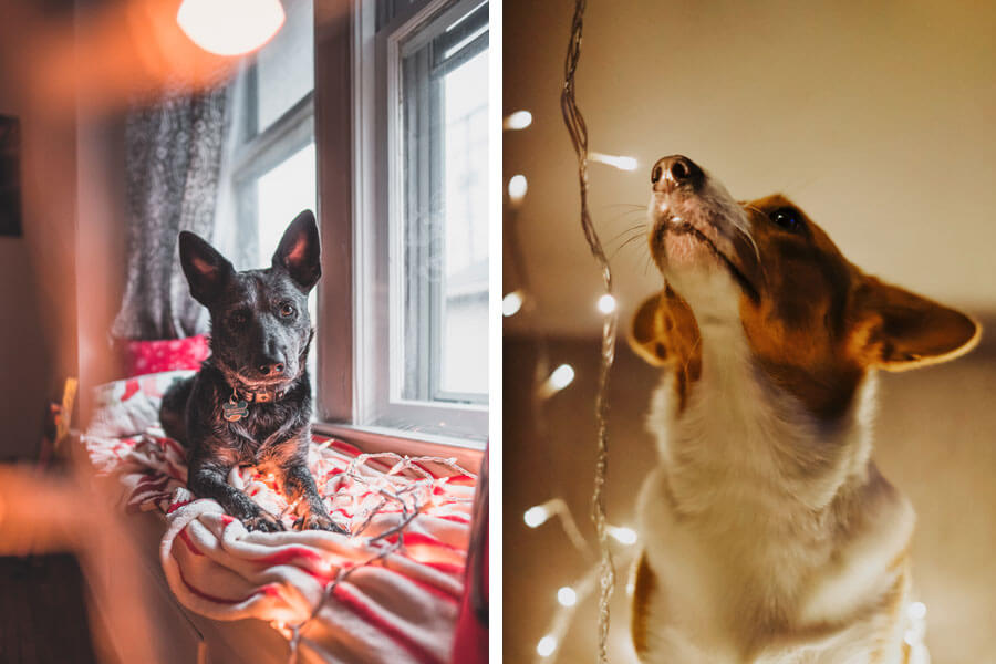 dogs with stringed lights