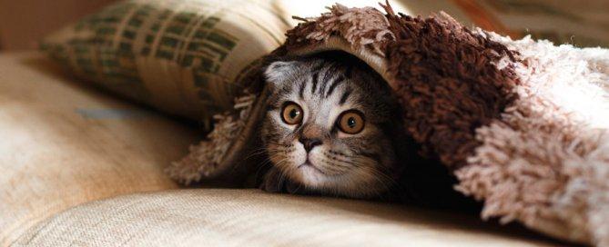 grey cat under blanket