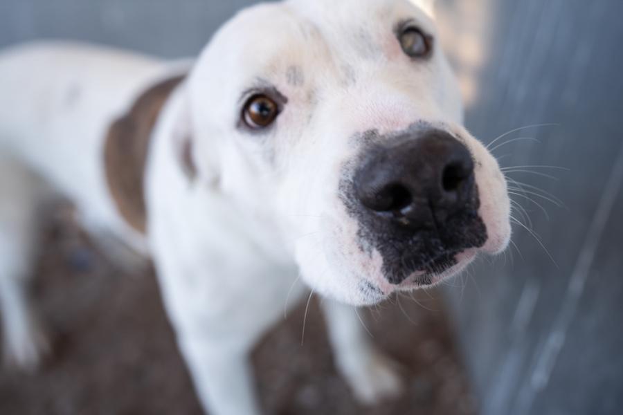 puppy national pet adoption day