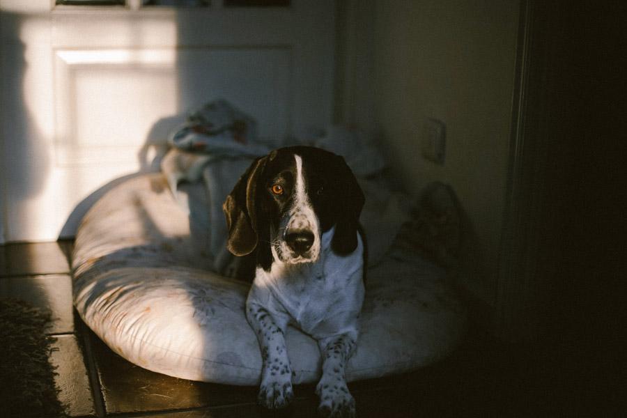 short-coated dog on bed