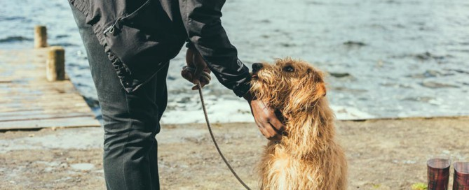 man outdoors with dog on lead, responsible pet parenting