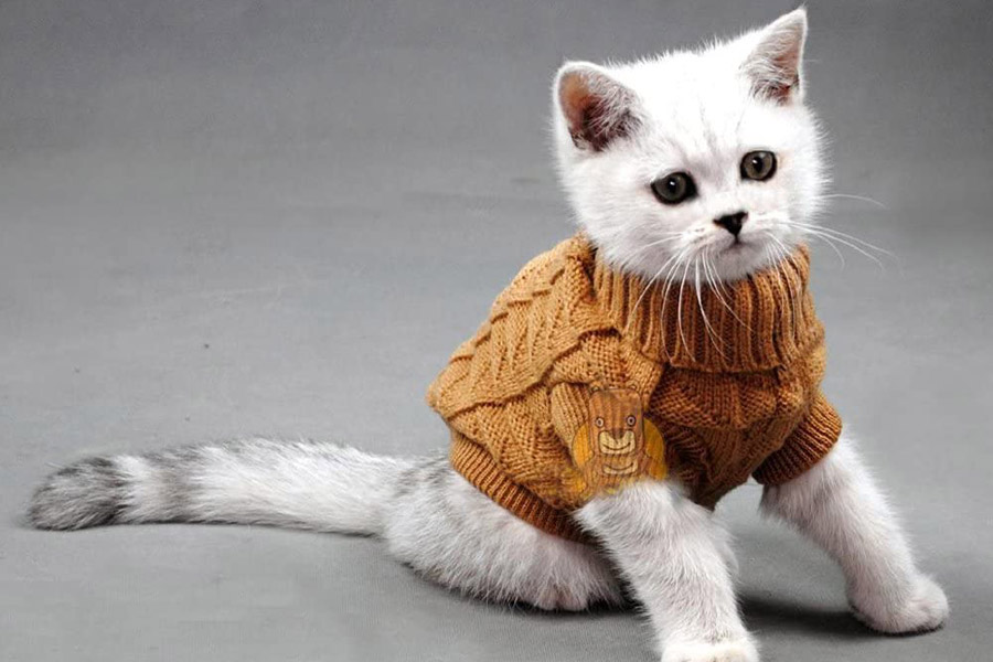 kitten wearing brown jumper