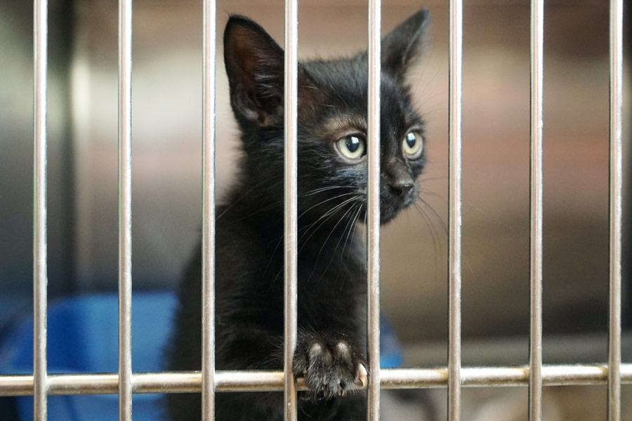 black kitten in cage