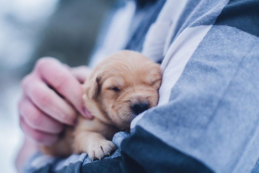 puppy in human's arms