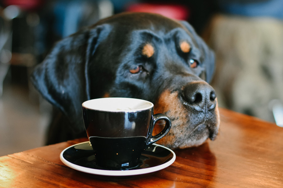 dog in cafe, pet-friendly cities