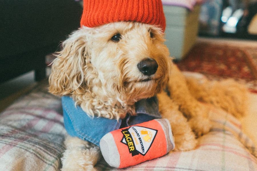 dog wearing red beanie, pet industry trends