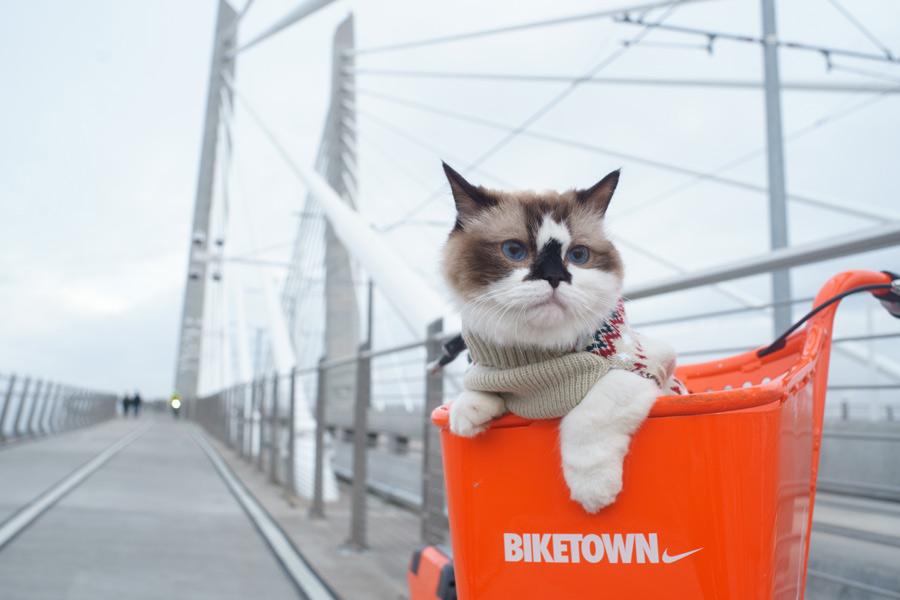 car in orange basket, pet industry trends