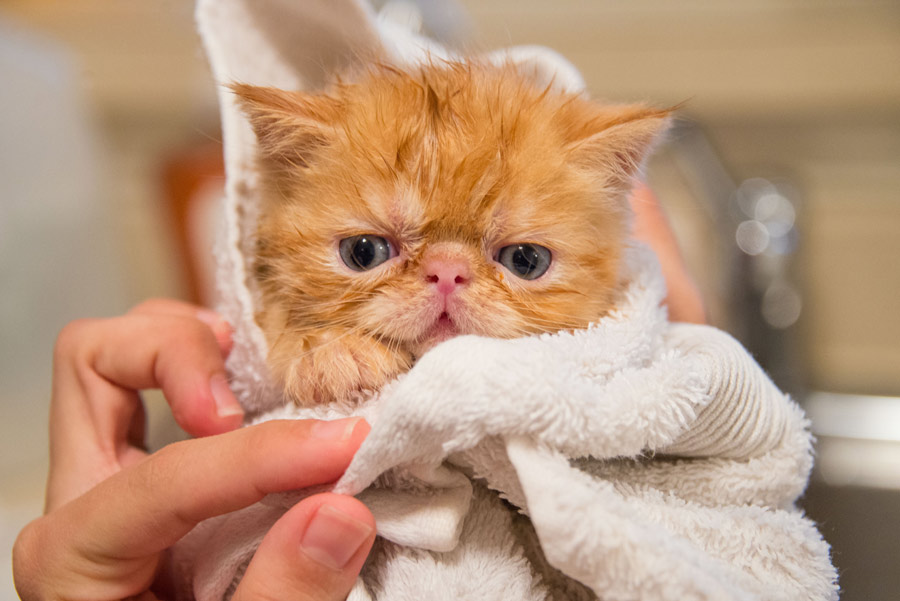 sick cat wrapped in a towel