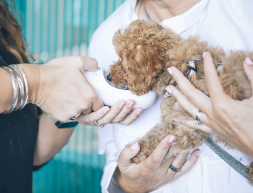 Pet insurance: how to educate your clients