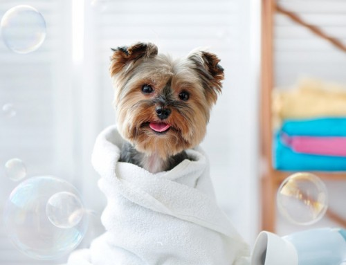 Pet grooming insurance — is it worth it?