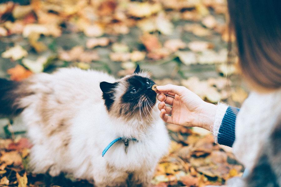 woman feeding cat, winter, cat safety