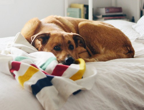 5 common dog health problems