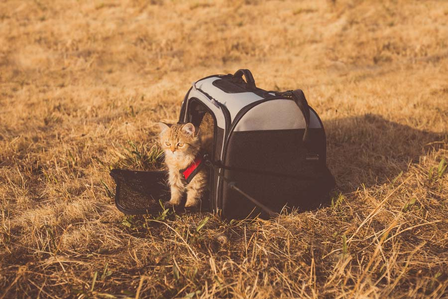 kitten in carry case