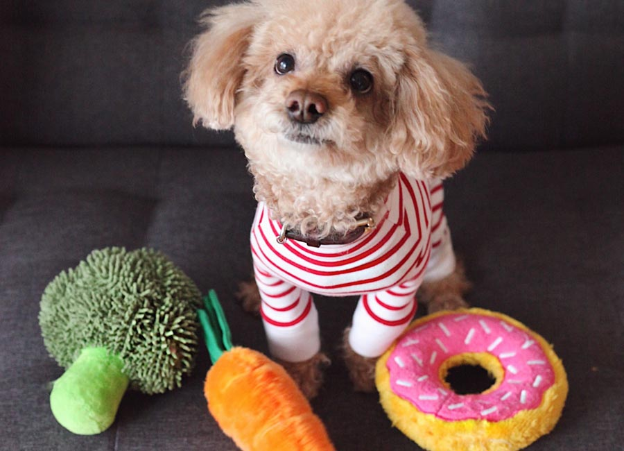 small dog with toy food