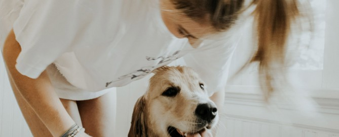 golden retriever being bathed, pet grooming